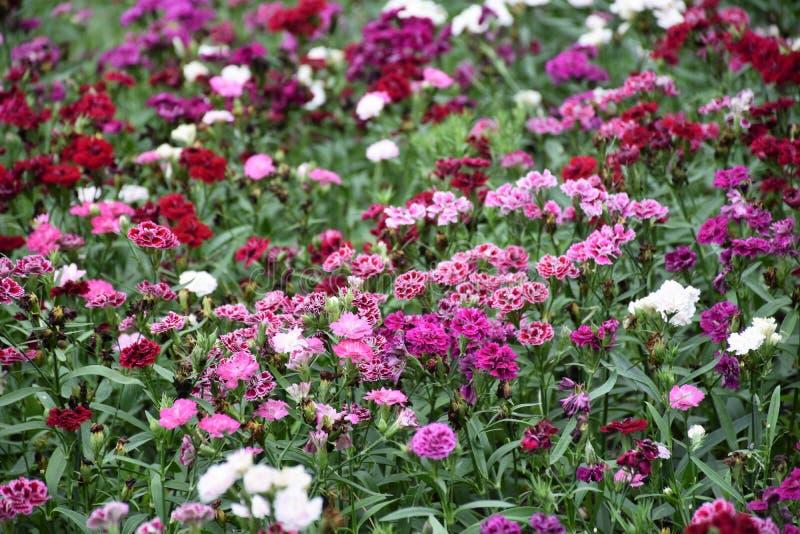 Fiore di farfalla fotografie stock