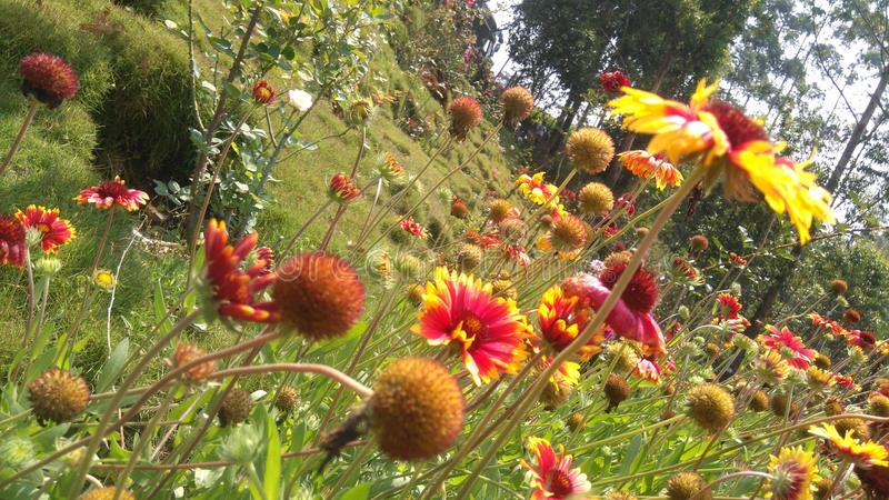 Fiore di farfalla fotografia stock