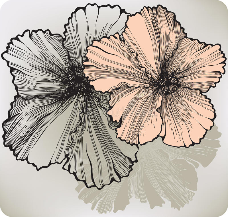 Fiore di fioritura dell'ibisco, a mano disegno Illustrazione di vettore illustrazione di stock