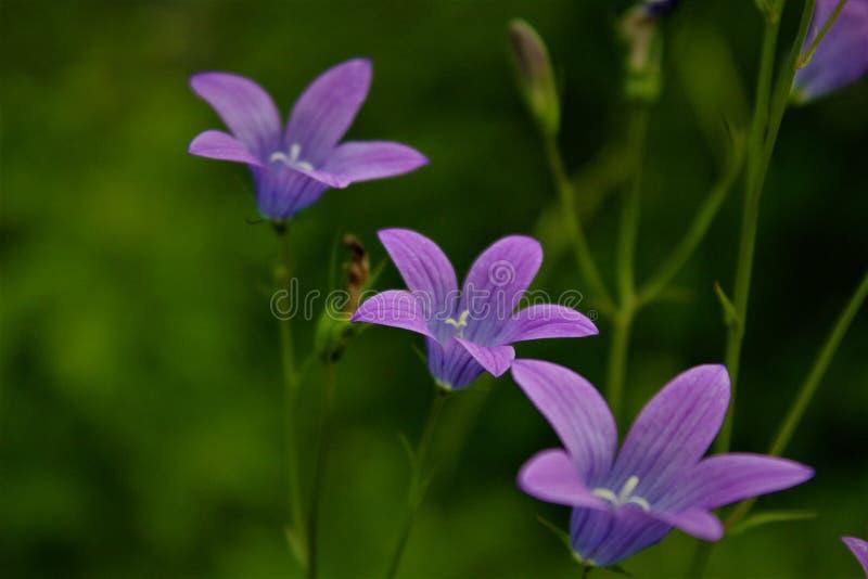 Fiore di Fuuny immagine stock libera da diritti