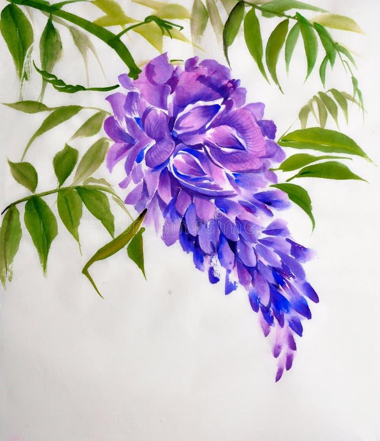 Lovely Download Fiore Di Glicine Illustrazione Di Stock. Illustrazione Di Fiore    49256816