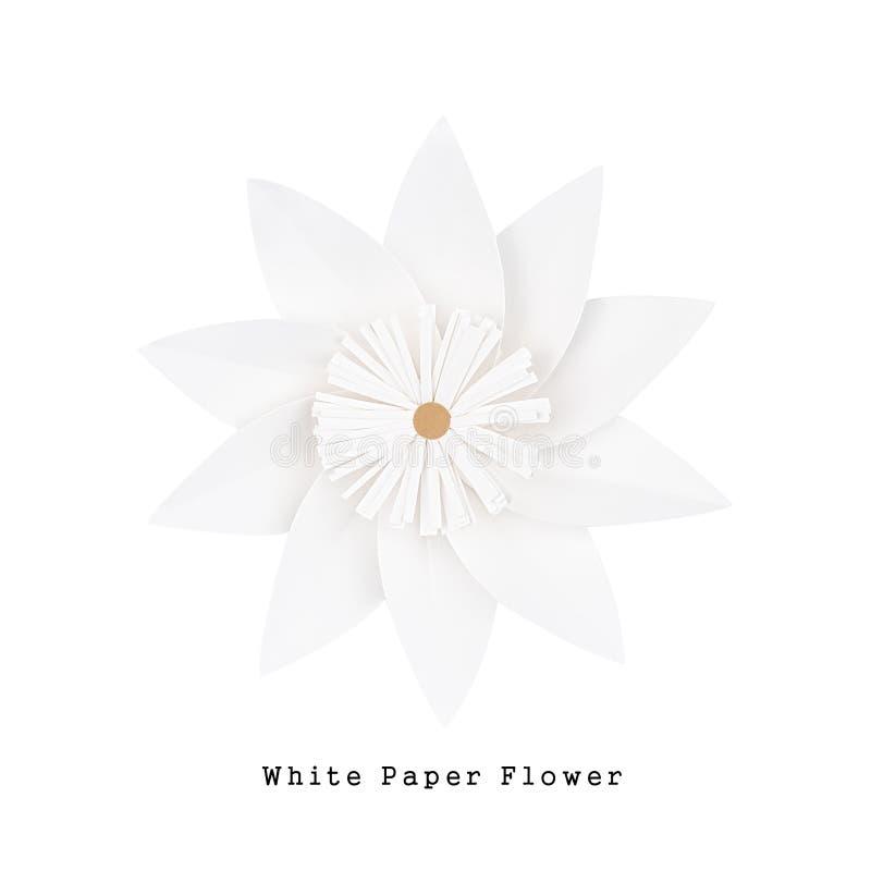 Fiore di Libro Bianco, vista superiore fotografia stock libera da diritti