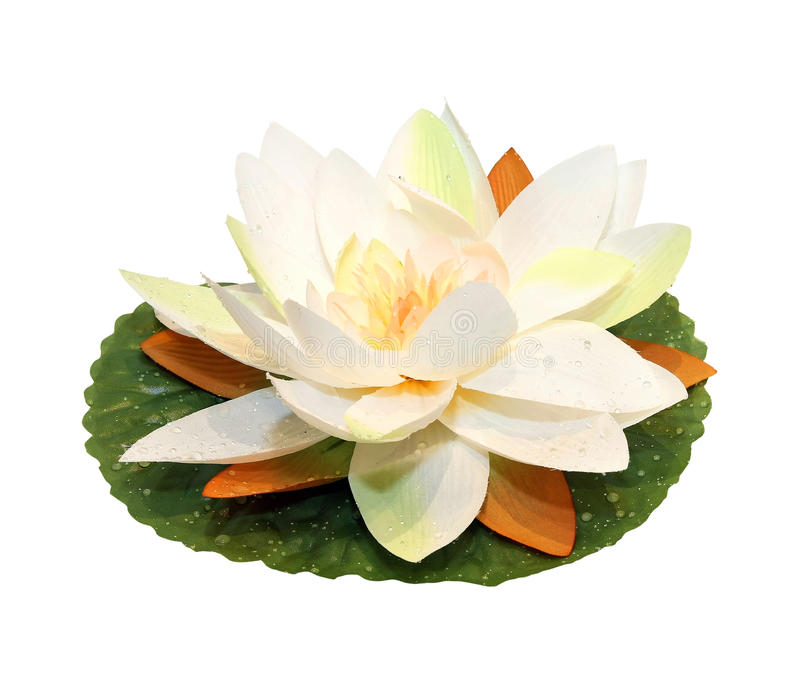 Fiore di loto fotografie stock