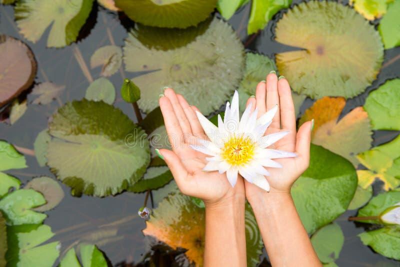Fiore di loto della tenuta della donna - waterlily immagini stock