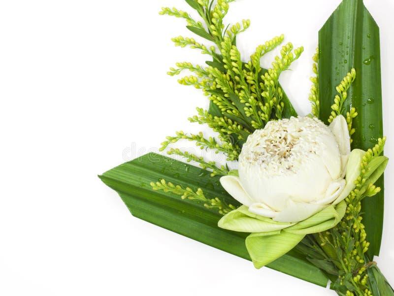 Fiore di loto per il buddista fotografia stock libera da diritti