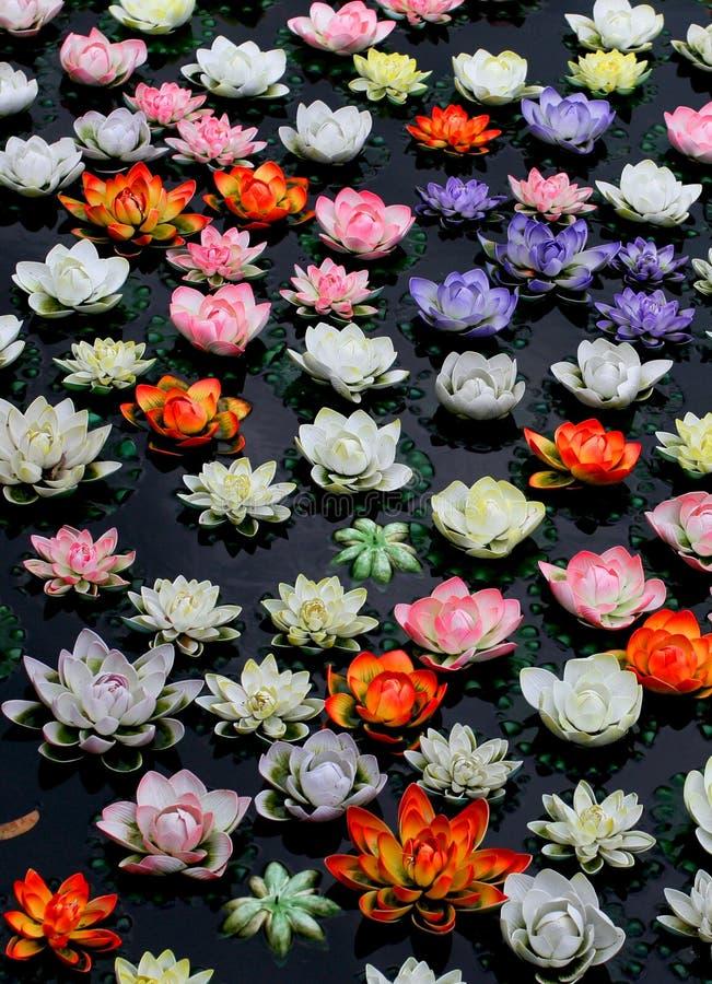 Fiore di loto variopinto in fiume immagini stock libere da diritti