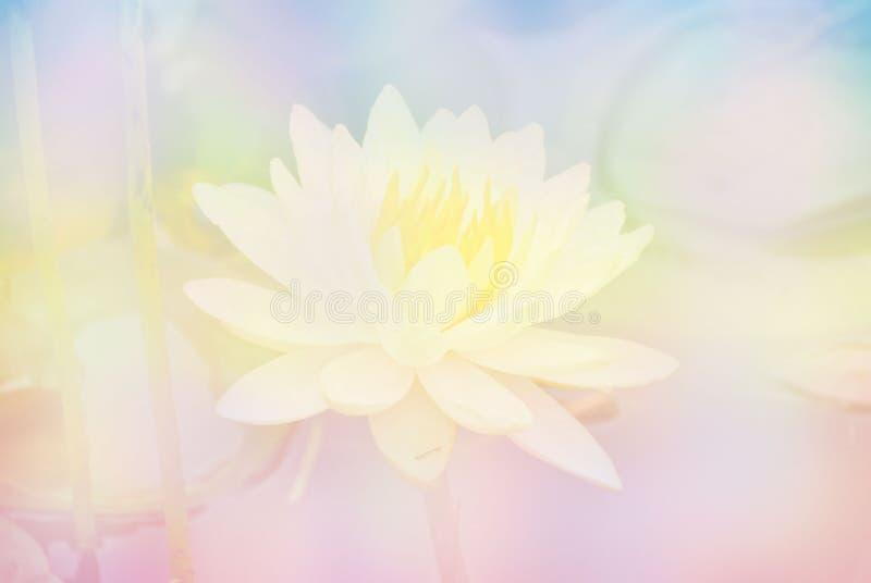 Fiore di Lotus molle della sfuocatura nel fondo del dolce di colori pastelli fotografie stock libere da diritti