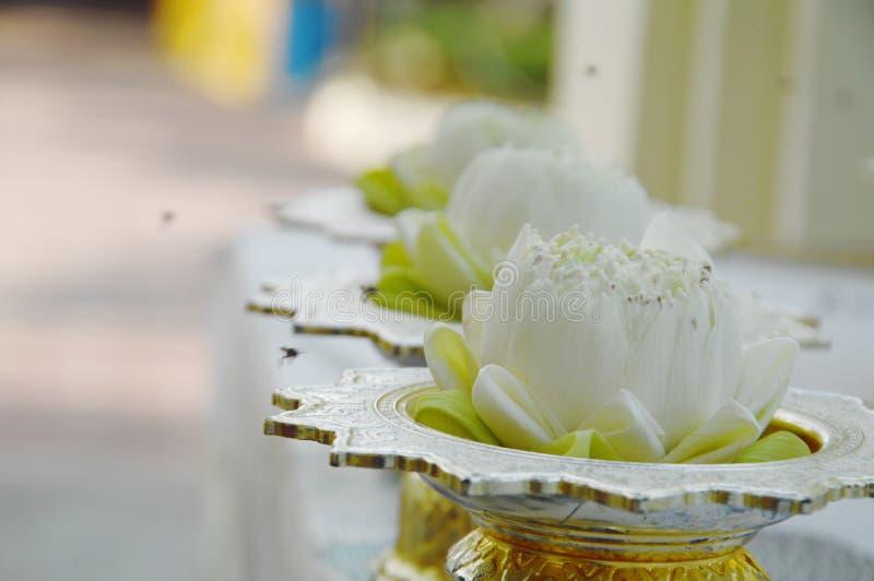 Fiore di Lotus per l'offerta del Buddha sulla pentola d'argento fotografie stock libere da diritti