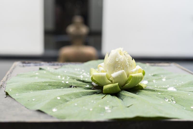 Fiore di Lotus per la statua pregante di Buddha fotografia stock