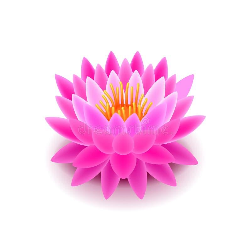 Fiore di Lotus sul vettore bianco illustrazione vettoriale