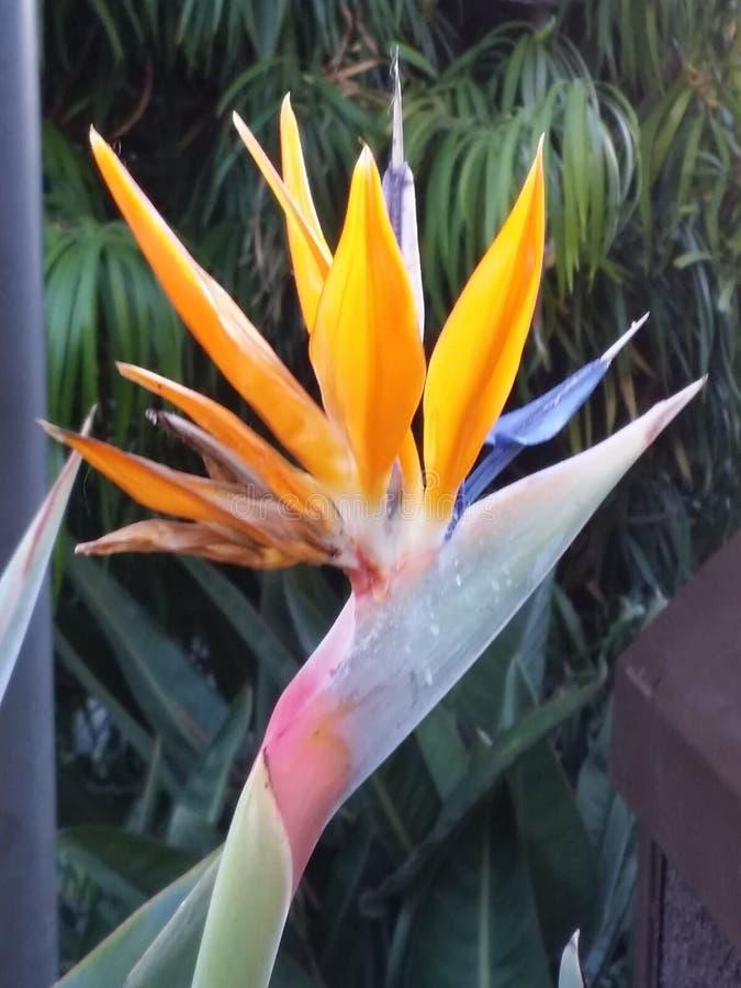 Fiore di mattina immagine stock