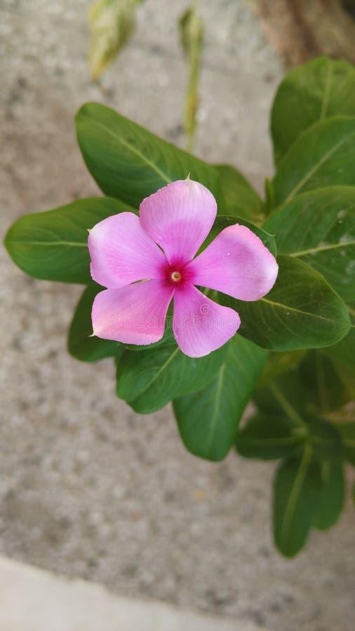 Fiore di mattina immagine stock libera da diritti