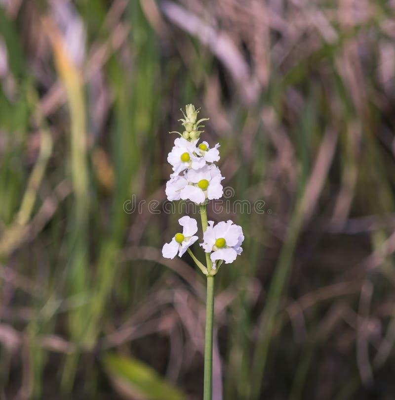 Fiore di mattina in primavera fotografie stock libere da diritti