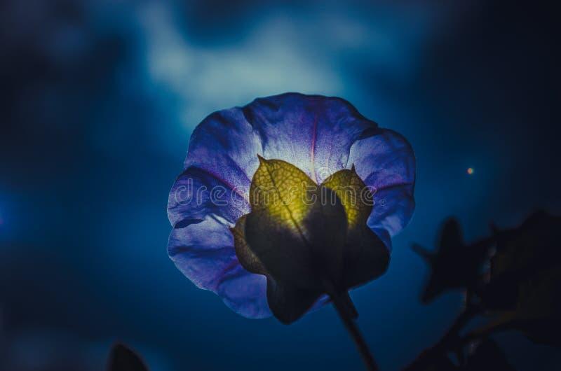 Fiore di notte fotografia stock