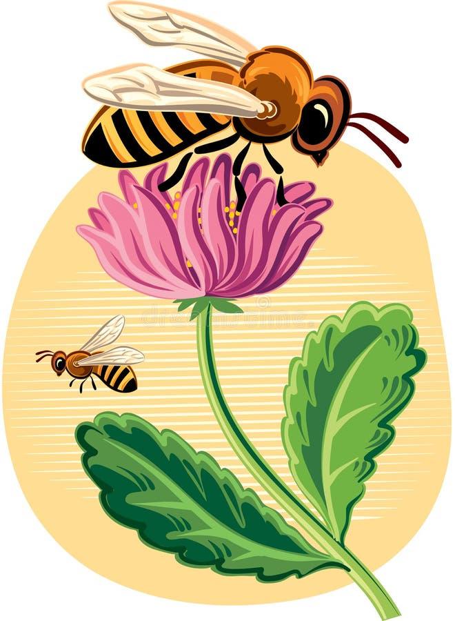 Fiore di ona dell'ape operaia illustrazione di stock