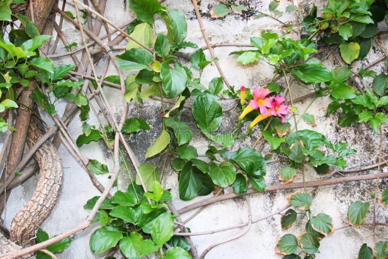 Fiore di parete Positano, Italia immagini stock
