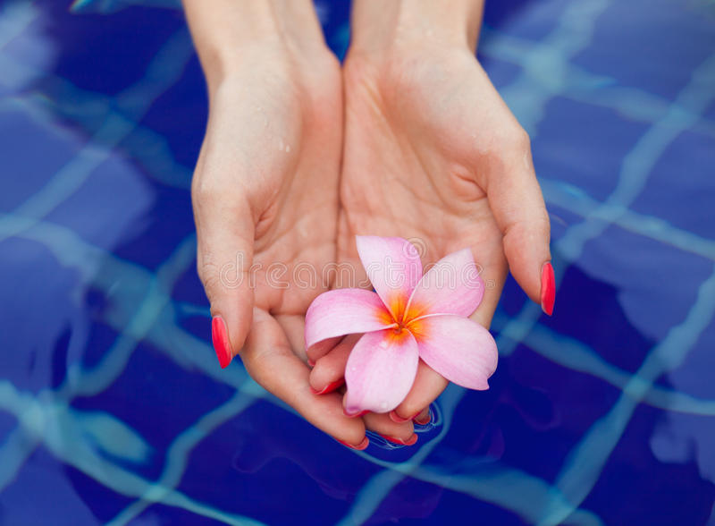 Fiore di Plumeria in mani immagine stock libera da diritti