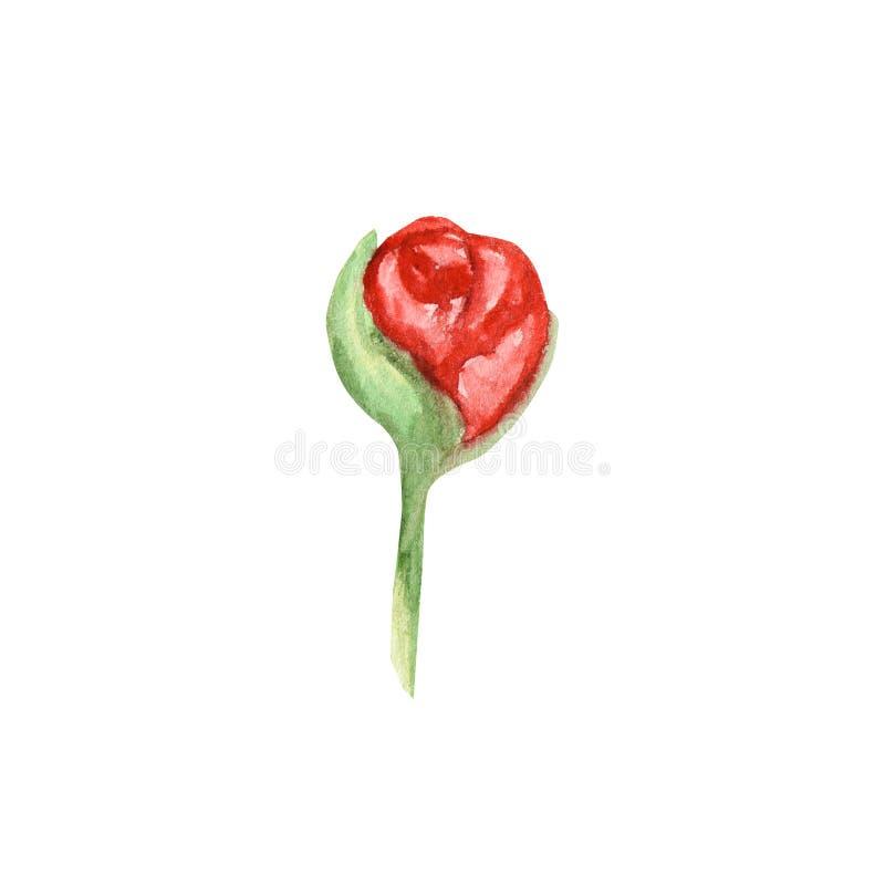 Fiore di rosa della peonia del Wildflower in uno stile dell'acquerello isolato Wildflower dell'acquerello per fondo, la struttura illustrazione vettoriale