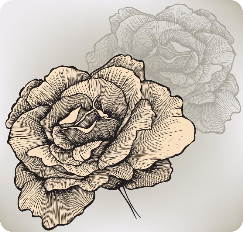 Fiore di Rosa, a mano disegno. Illustrazione di vettore. illustrazione di stock