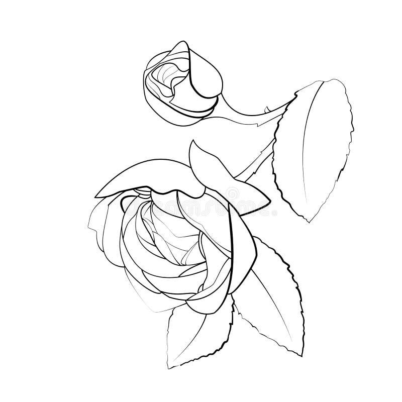 Fiore di Rosa su fondo bianco illustrazione vettoriale