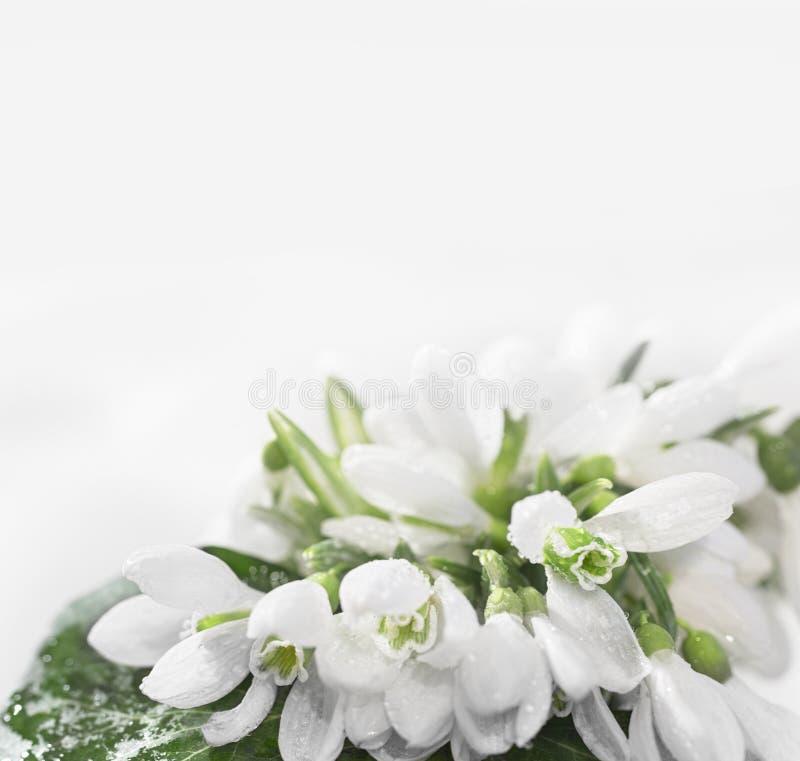 Fiore di Snowdrop fotografie stock libere da diritti