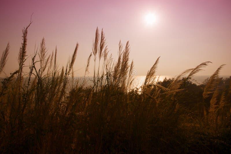 Fiore di vetro e lo sfondo naturale del sole fotografia stock libera da diritti