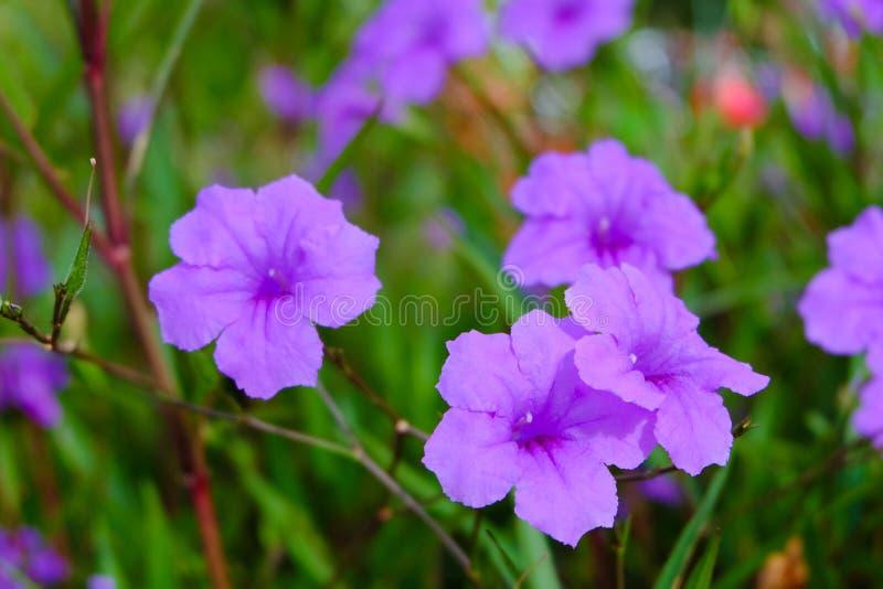Fiore di Waterkanon fotografia stock