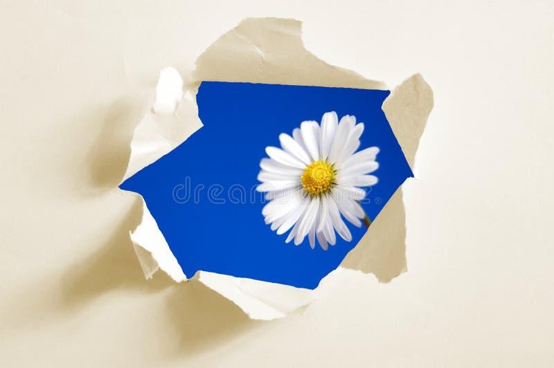Fiore dietro il foro in documento immagine stock libera da diritti