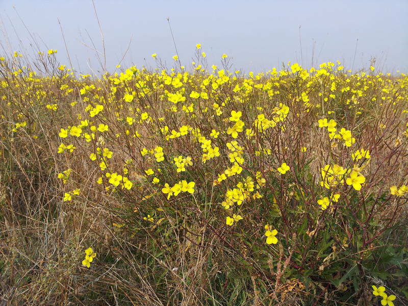 Fiore e cielo blu gialli fotografie stock libere da diritti