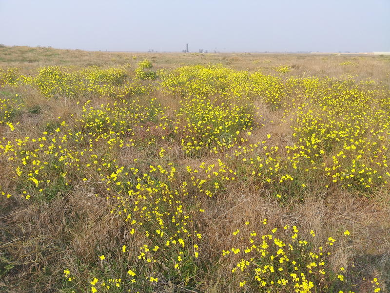 Fiore e cielo blu gialli fotografia stock
