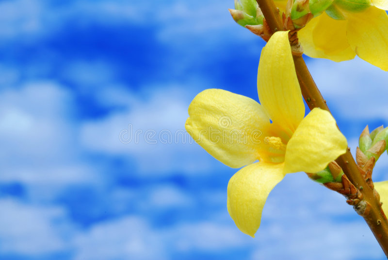 Fiore e cielo blu gialli immagine stock libera da diritti