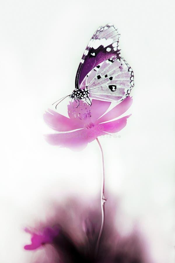 Fiore e farfalla illustrazione vettoriale