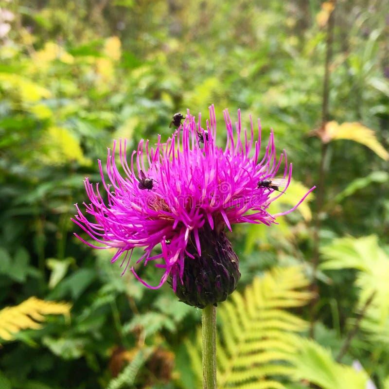 Fiore e flyes fotografie stock libere da diritti