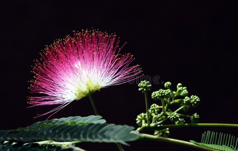 Fiore e fogli dentellare immagine stock