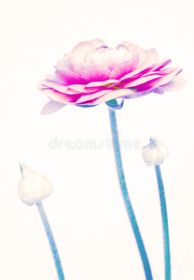 Fiore e germogli astratti fotografie stock libere da diritti