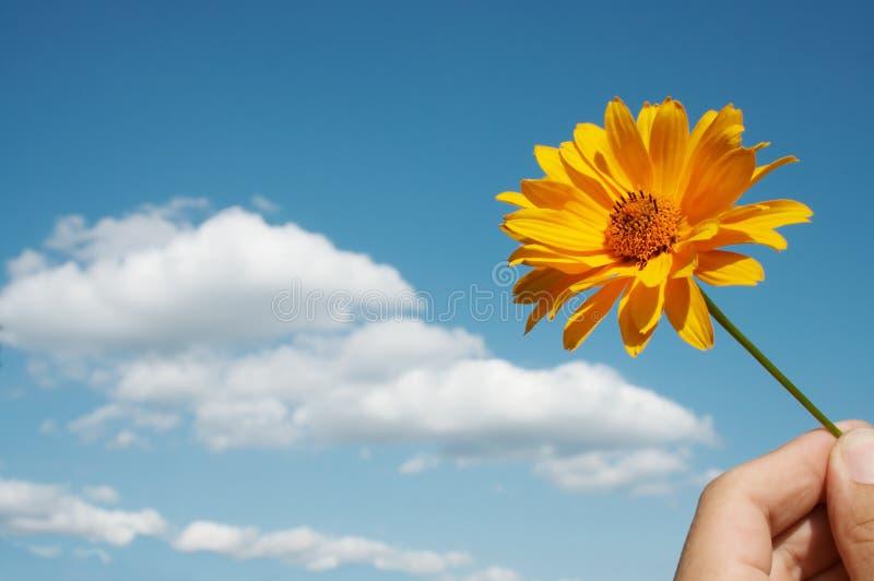 Fiore e mano fotografie stock libere da diritti