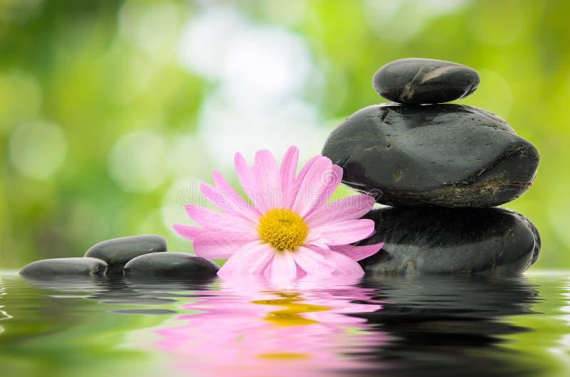 Fiore e pietra di zen fotografia stock libera da diritti