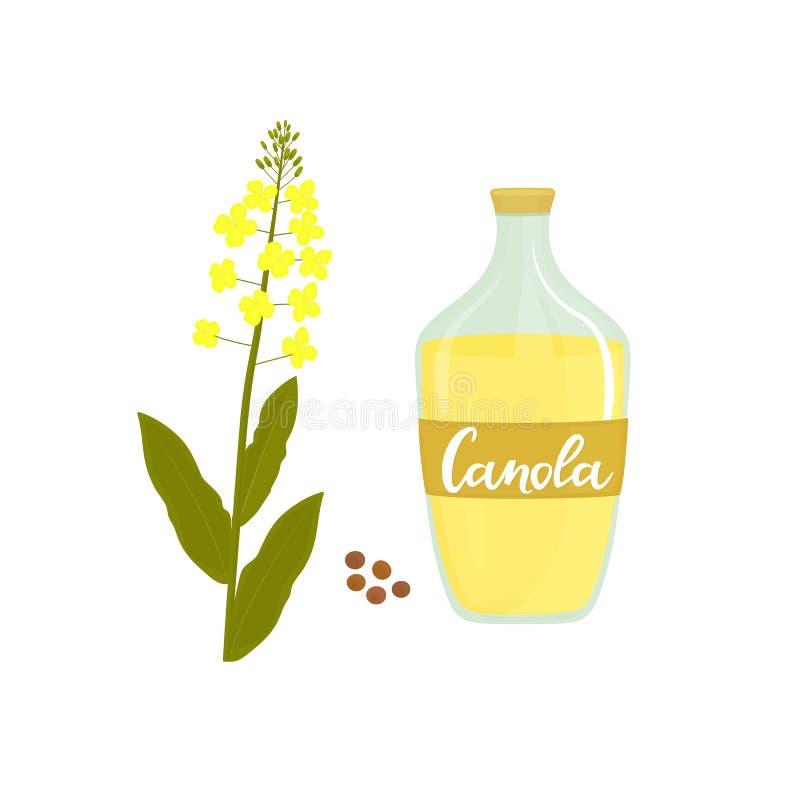 Fiore e semi del Canola Bottiglia di olio di colza illustrazione vettoriale