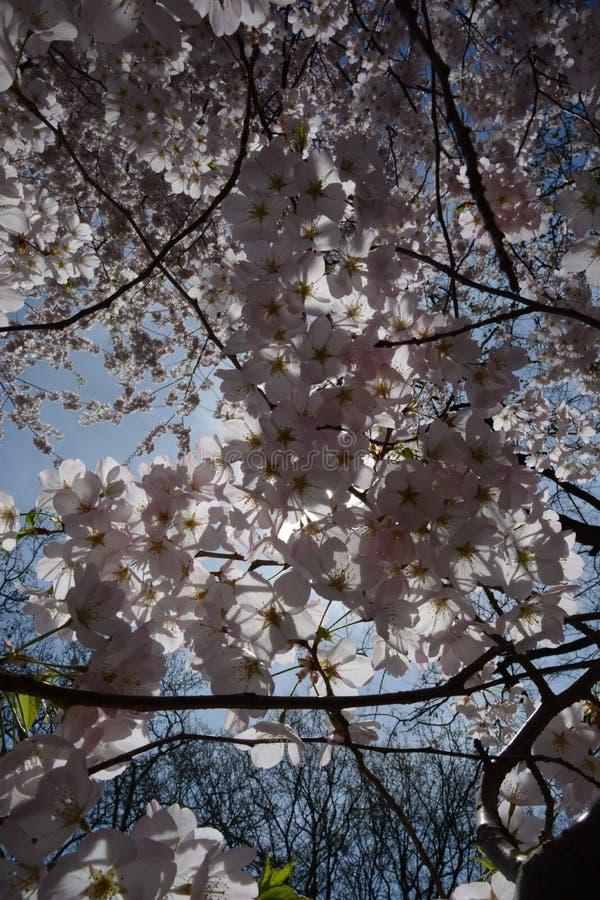 Fiore e Sun della primavera fotografia stock libera da diritti