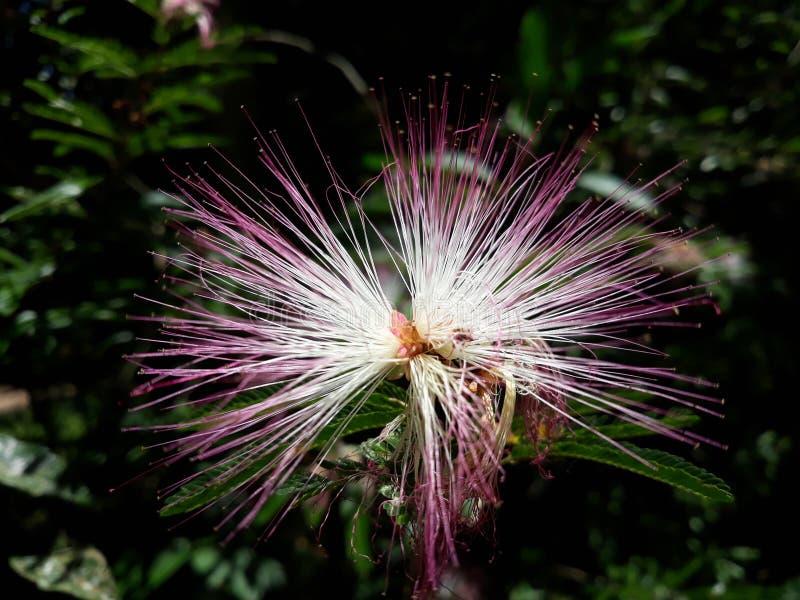Fiore esotico stesso fotografie stock