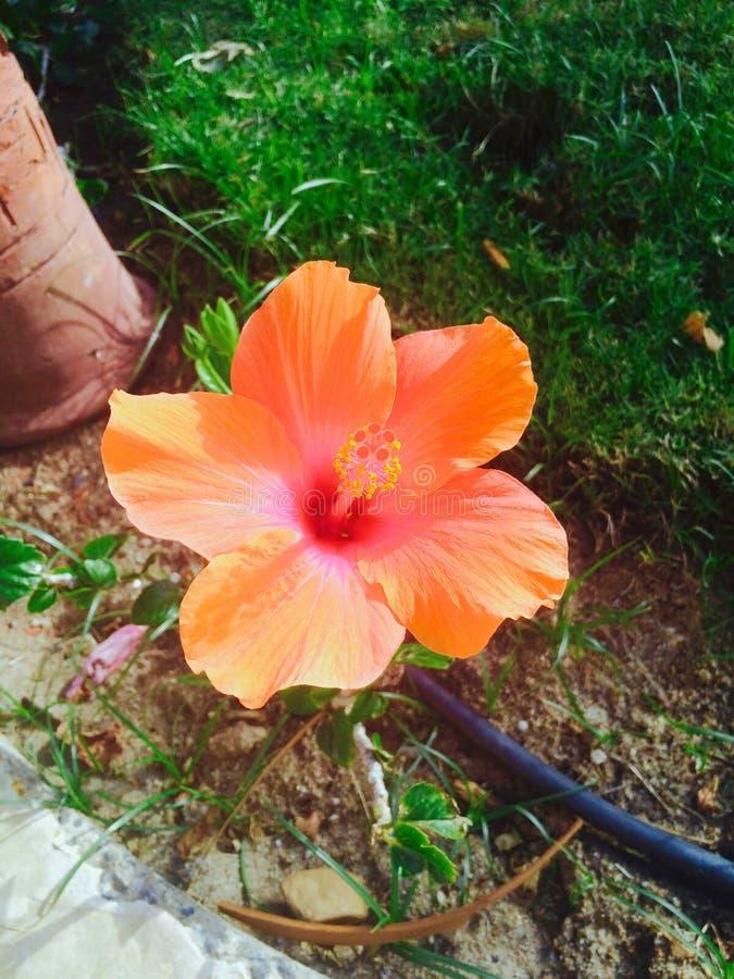 Fiore felice fotografia stock