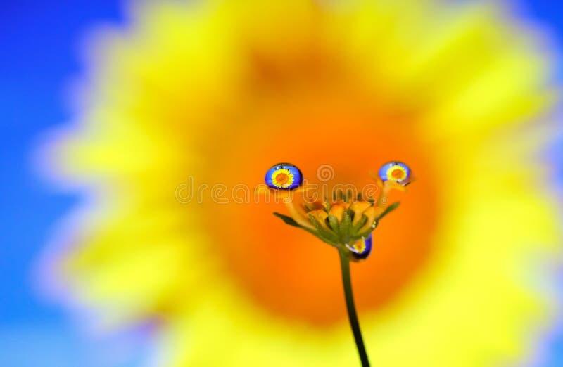 Fiore felice - colori luminosi - riflessione creativa fotografia stock