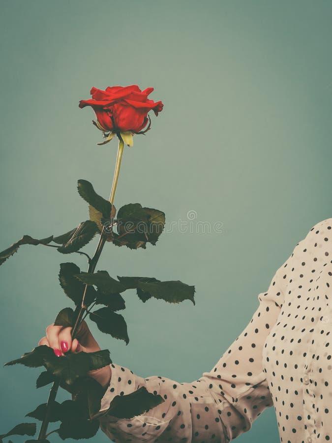 Fiore femminile della rosa rossa della tenuta della mano immagine stock libera da diritti