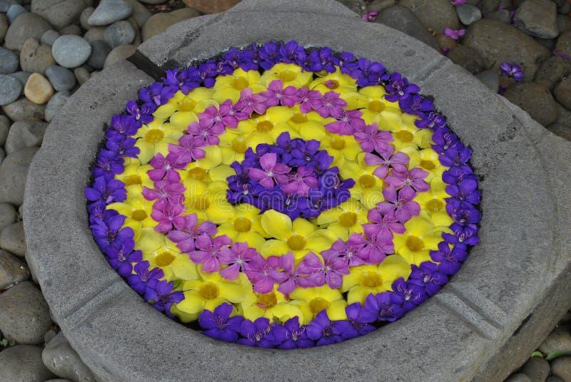 Fiore & fiori & pietre & le Mauritius & colori fotografie stock libere da diritti