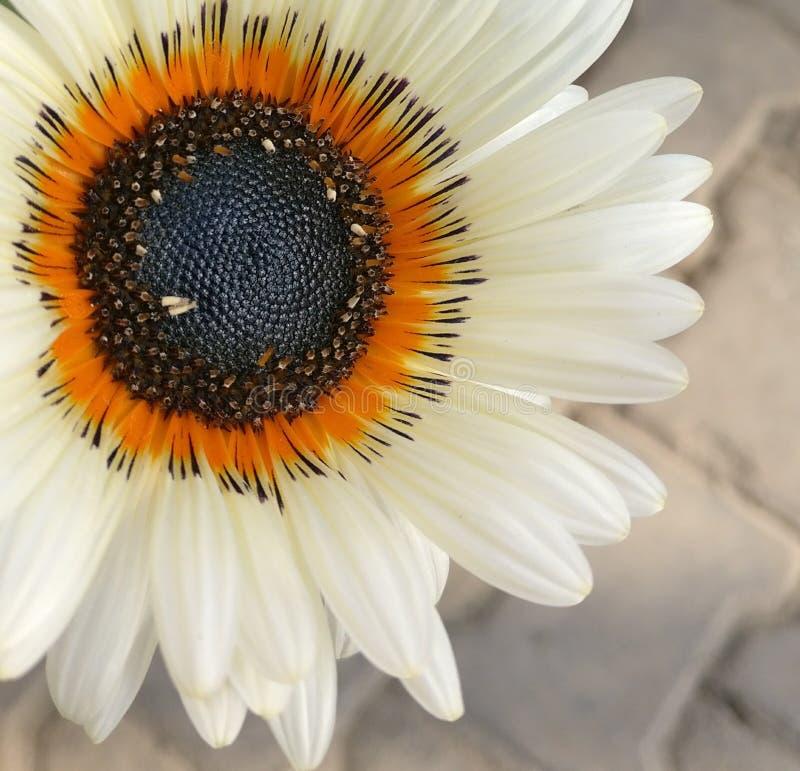 Fiore fresco immagini stock
