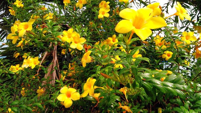 Fiore fresco immagine stock libera da diritti