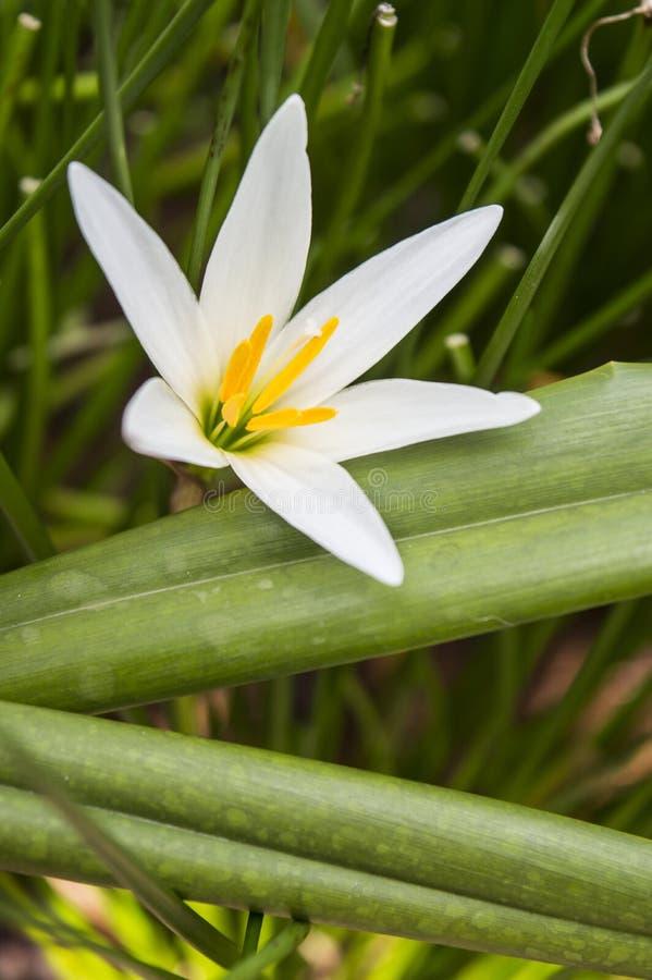 Fiore fresco di mattina immagine stock