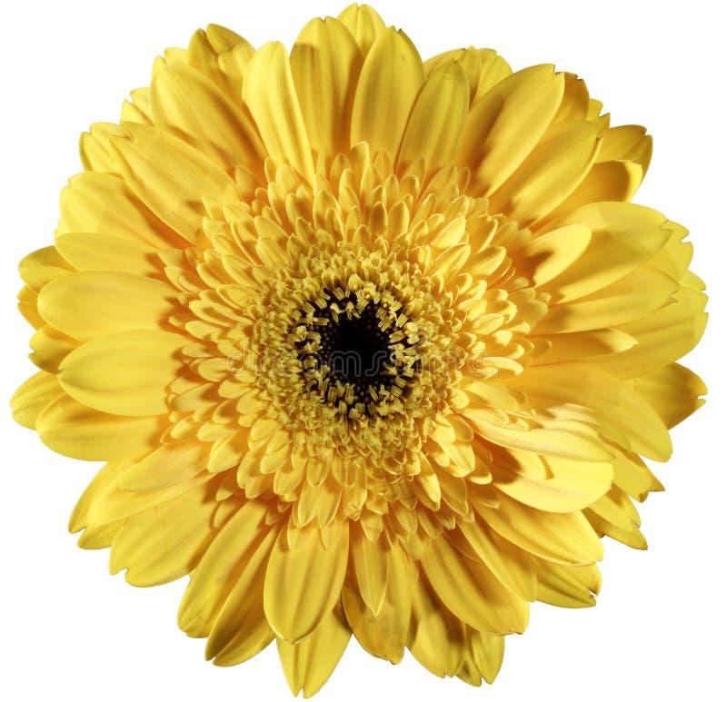 Download Fiore giallo immagine stock. Immagine di stile, sorriso - 213511