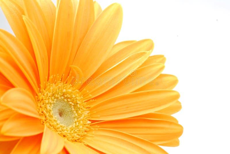 Fiore giallo immagine stock
