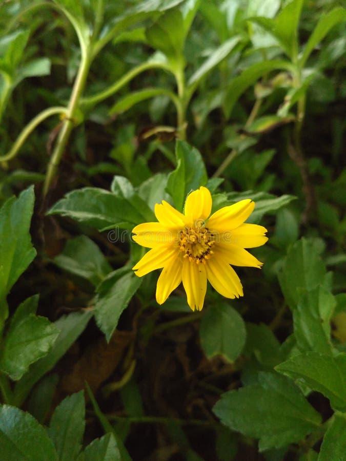 Fiore giallo Ciao primavera! fotografie stock libere da diritti